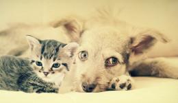Divani in tessuto un sof per tutta la famiglia - Gatto divano microfibra ...