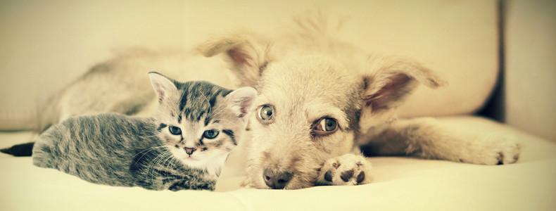 Divano cane e gatto convivenza possibile - Gatto divano microfibra ...
